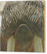 Walrus Whiskers Wood Print