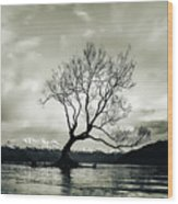 Wanaka Tree - New Zealand  Wood Print