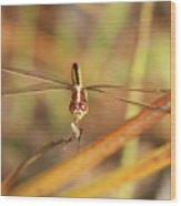 Wandering Glider Dragonfly Wood Print