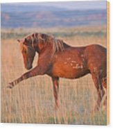 War Horse Wood Print by Sandy Sisti