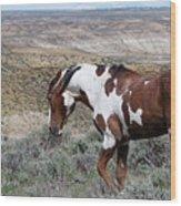 Warhorse Wood Print