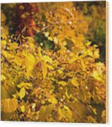 Warm Fall Colors Wood Print