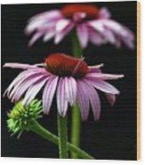 Warm Lavender Coneflower Wood Print
