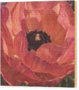 Warm Tone Ranunculus Wood Print