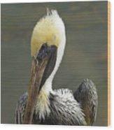 Wary Brown Pelican Wood Print