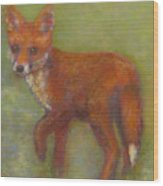 Wary Fox Cub Wood Print