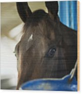 Wary Racehorse Wood Print