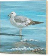Wary Seagull Wood Print