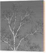 Washington Island Birch Wood Print