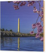 Washington Reflection And Blossoms Wood Print