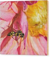 Wasp And Flower Wood Print