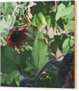 Wasp And Sunflowers Wood Print