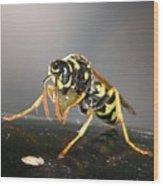 Wasp At Work Wood Print