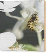 Wasp At Wotk Wood Print