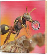 Wasp Blowig Bubble 160507e Wood Print