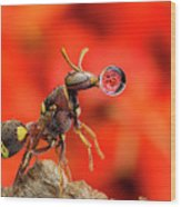 Wasp Blowing Bubble 160507c Wood Print