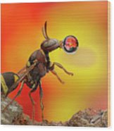 Wasp Blowing Bubble 160605d Wood Print