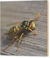 Wasp Close-up Wood Print