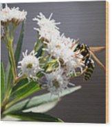 Wasp Closeup Wood Print