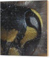 Wasp Eye Wood Print