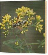 Wasp Wood Print