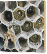 Wasp Nursery Wood Print