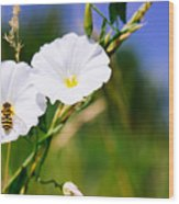 Wasp On A White Flower Wood Print