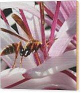 Wasp On Flower Wood Print