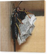 Wasp On Nest Wood Print