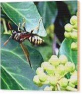Wasp On The Ivy Wood Print