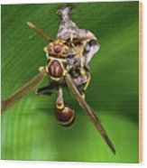 Wasp With Egg Wood Print