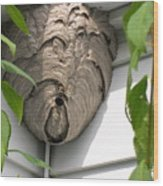 Wasps At Work Wood Print