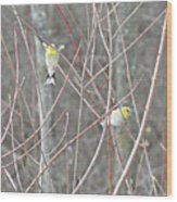 Watch Me One Bird In Flight Wood Print
