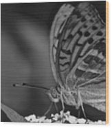 Watchful Butterfly Wood Print