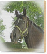 Watchful Mare Wood Print