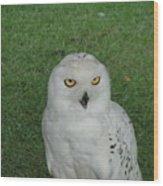 Watching Owl Wood Print