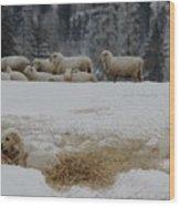 Watching The Herd Wood Print