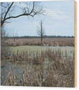 Water And Cattails Wood Print