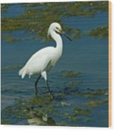 Water Bird Wood Print