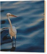 Water Bird Series 31 Wood Print