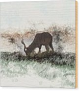water buck in Addo Park S.A. Wood Print