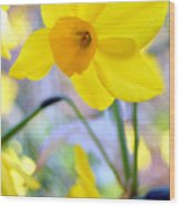 Water Color Daffodil Wood Print