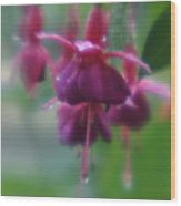 Water Drop Monets Garden Wood Print