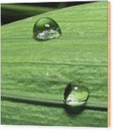Water Droplet On A Leaf Wood Print