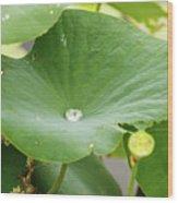 Water Droplet  Wood Print