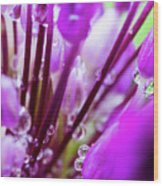 Water Droplets And Purple Flower Wood Print