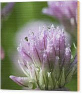 Water Droplets On Chives Flowers Wood Print