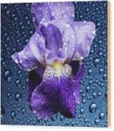 Water Drops On Purple Iris Wood Print