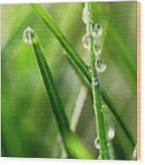 Water Drops On Spring Grass Wood Print