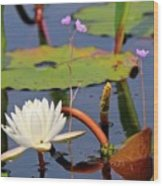 Water Flowers Wood Print